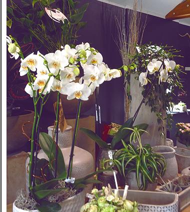 Bienvenue à l'Atelier floral K-LA